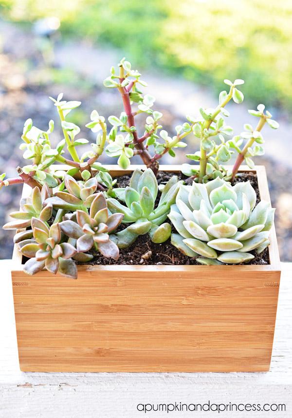 Keeping Hope Alive >> Succulent Planter Box {Ikea Hack} - A Pumpkin And A Princess