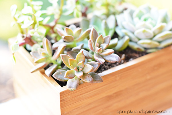 IKEA hack: succulent planter box by Crystal Owens