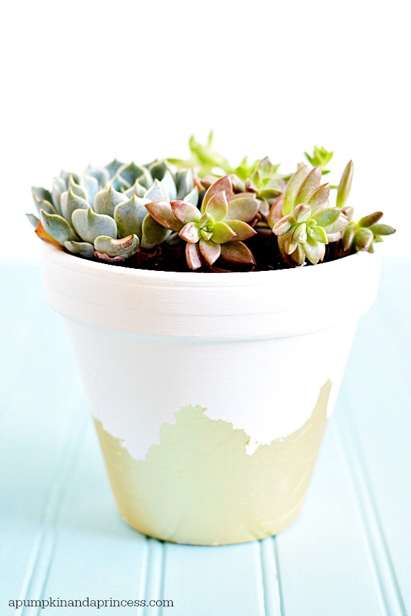 Succulent Gold Leaf Planter