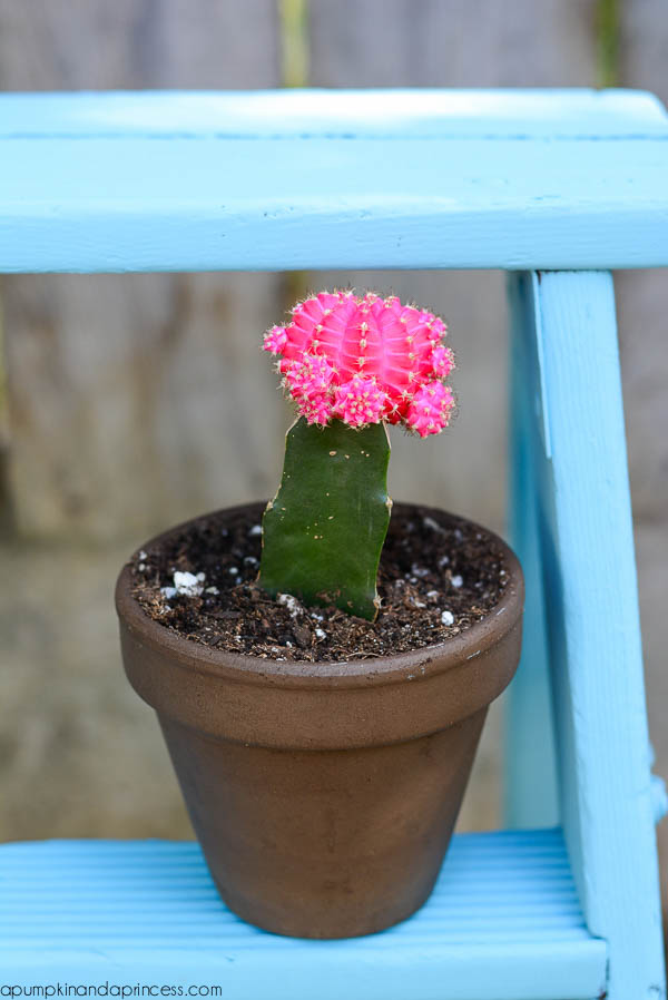 Pink Cactus Planter