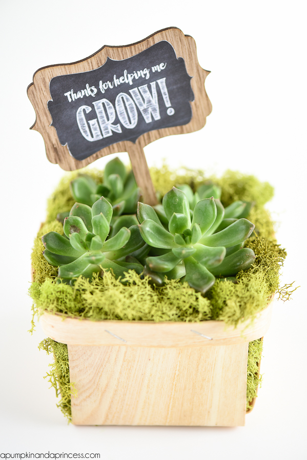photograph relating to Thanks for Helping Me Grow Free Printable titled Succulent Present - Because of for aiding me expand - A Pumpkin And