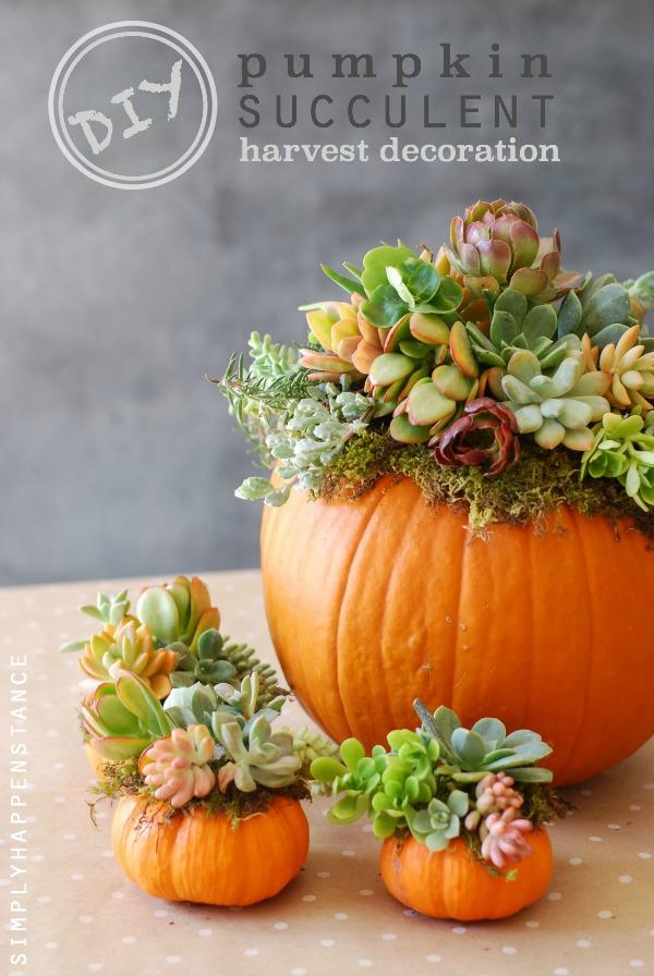 diy-pumpkin-succulent