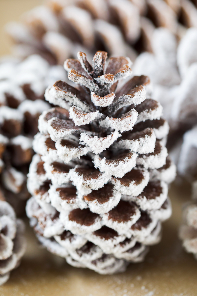 DIY Pine Cone Craft - decorate pine cones with real flocking powder and water to create a snowy winter wonderland decoration.